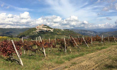 Visiting Istrian wineries, Motovun
