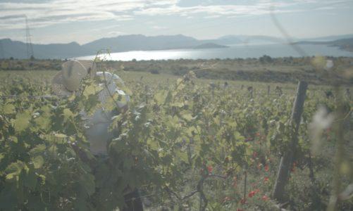 Kairos Vina Studies Soil Microbiota with Grant