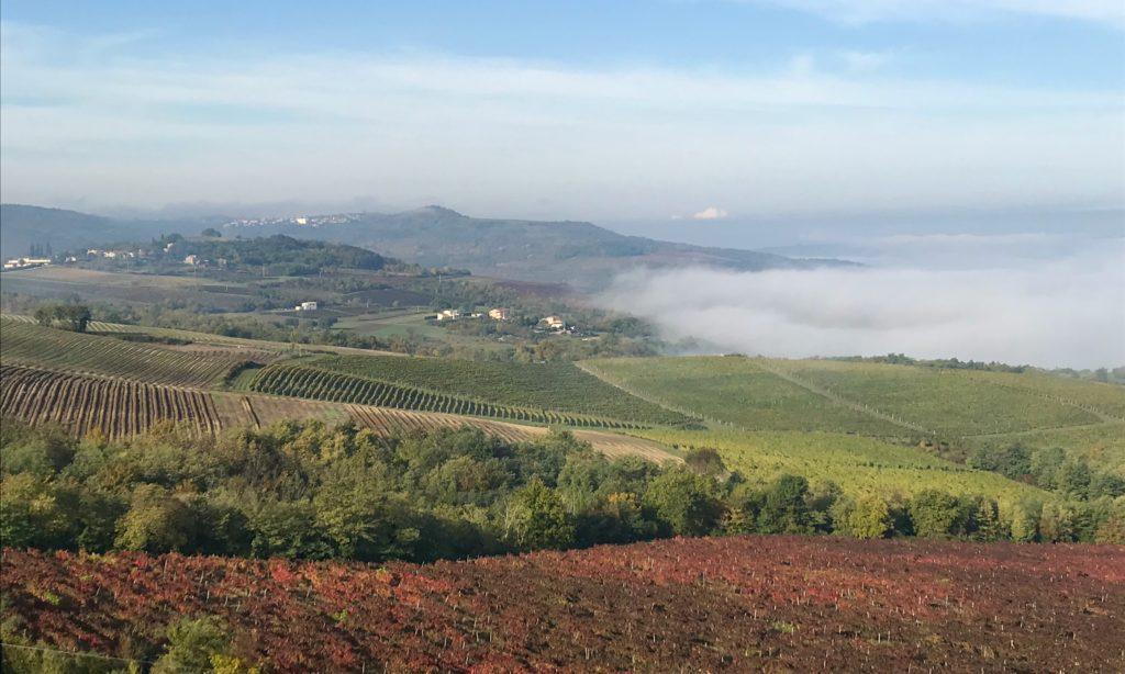 Vineyard view from Motovun, Istria