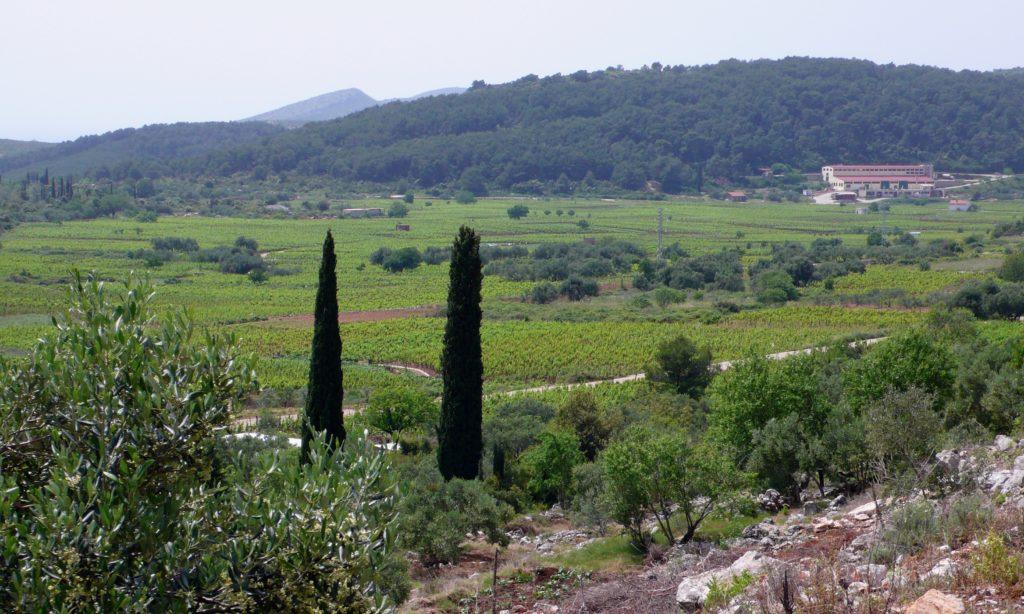 The wine co-op in the Čara valley, Korčula