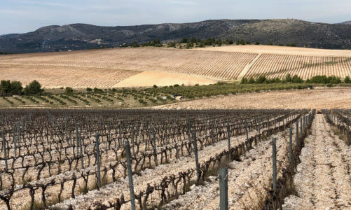 February: Preparing Vineyards for New Growth