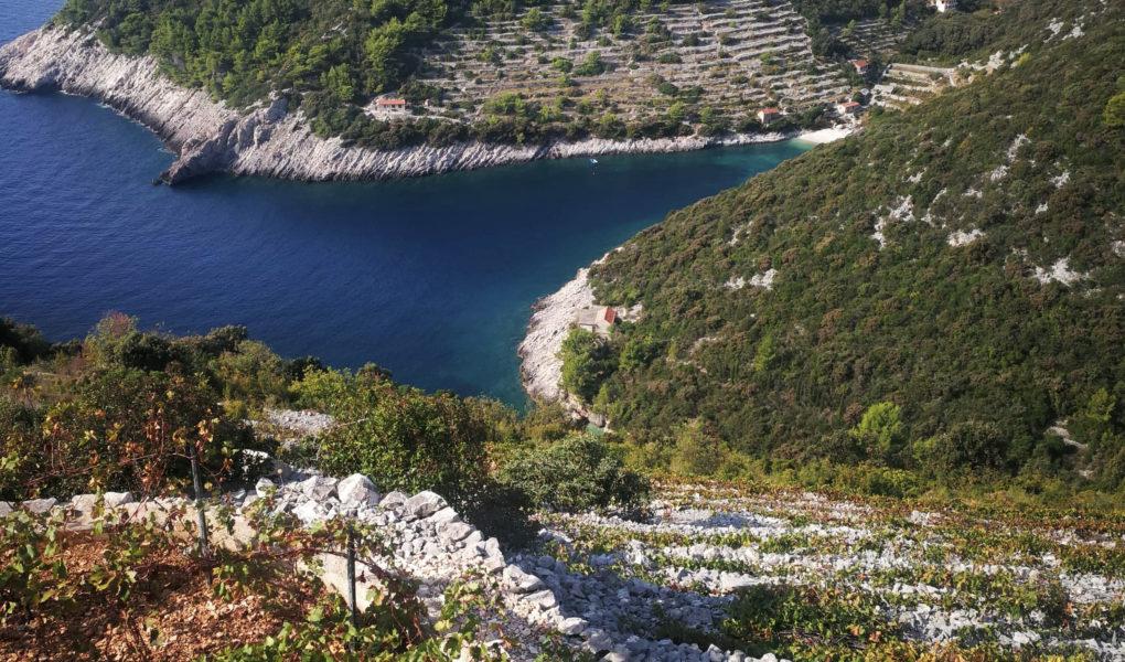 Krajančić vineyards, Korčula