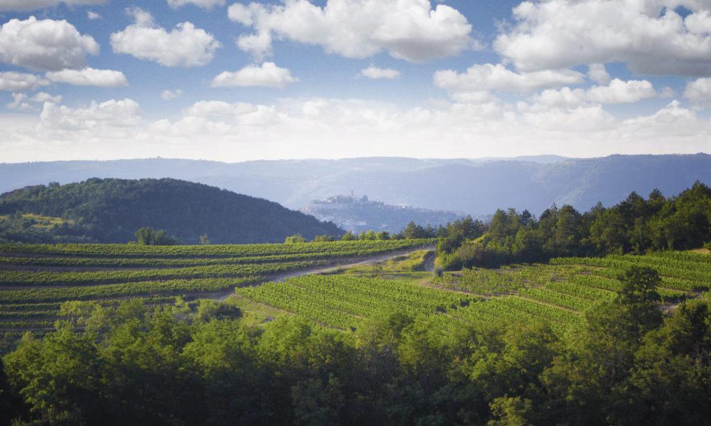 Benvenuti vineyards, Istria