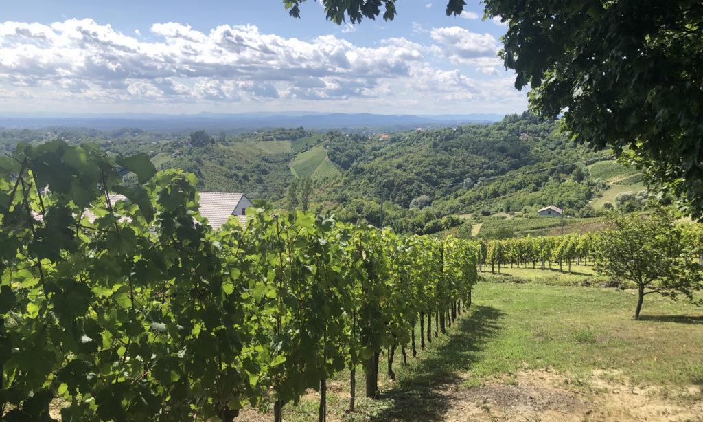 Korak winery, Plešivica, Croatia